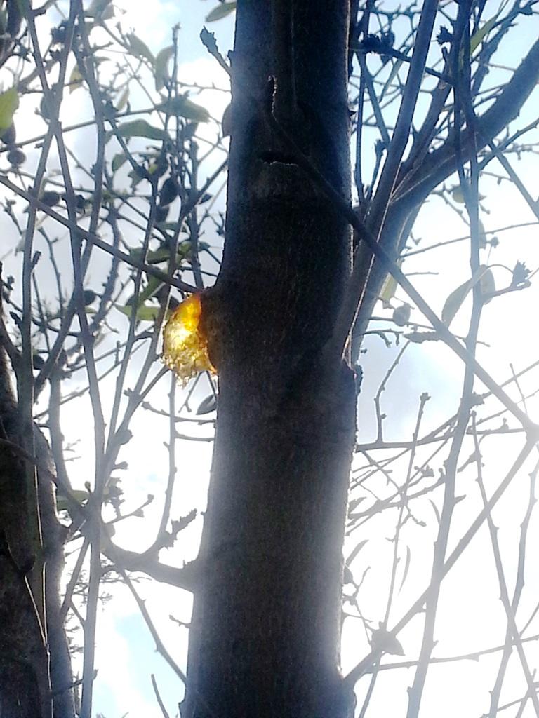 la plaie et la lumière